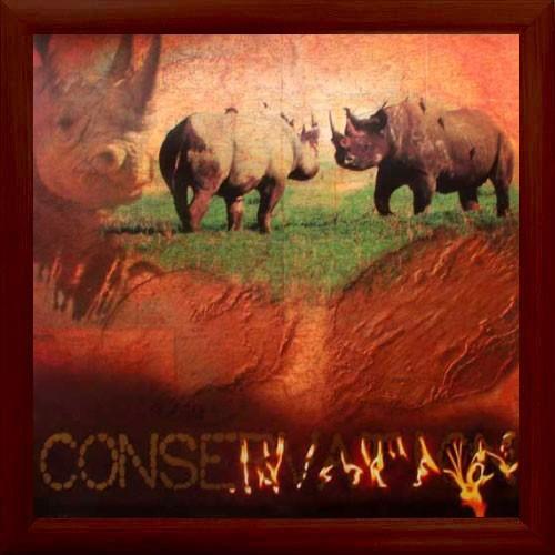 """Nashörner, """"Conservation"""""""