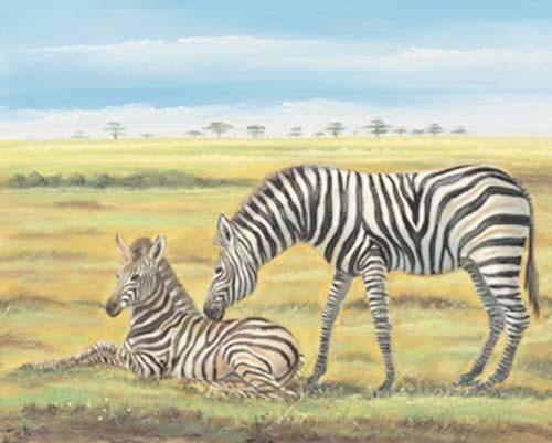 Zebras by Spencer Sidir *