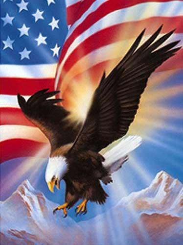 Weißkopfseeadler und USA Fahne Bild