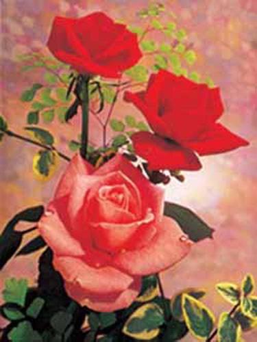 Rote Rosen mit Tautropfen Bild