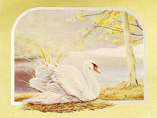 Schwan by F. A. Betteridge