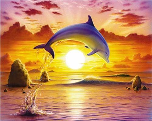 Springender Delfin im Sonnenuntergang Alubild