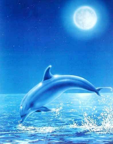 Springender Delfin bei Vollmond in blau Poster