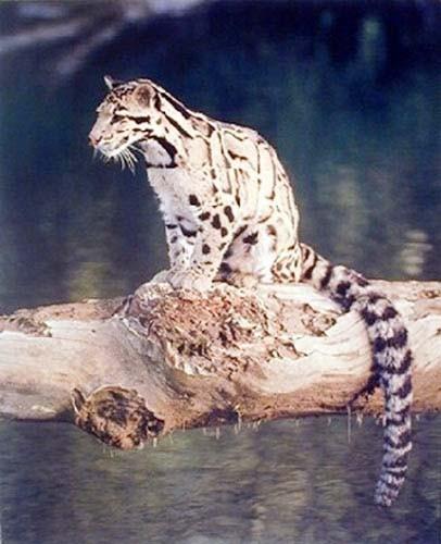 Leopard auf Baumstamm