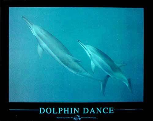 Tanz der Delfine Poster 40x50