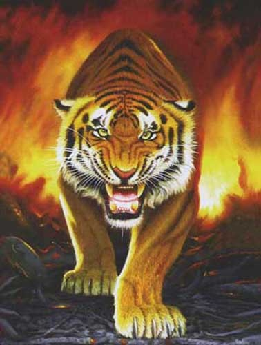 Tiger from the Embers by Meiklejohn Graphics