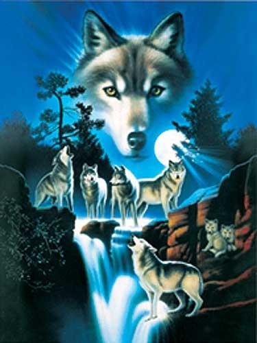 Wölfe bei Vollmondnacht Alu Bild
