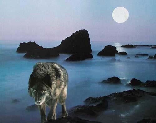 Schwarzer Wolf und Vollmond