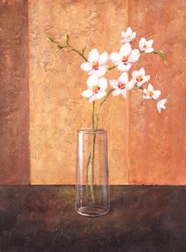 Orchideen Bild