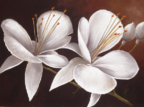 Weiße Orchideen Kunstdruck