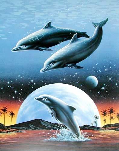Springende Delfine Fantasy, A. Metz Poster 40x50