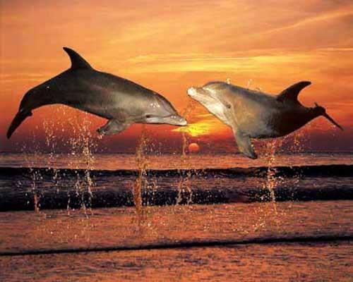 Sonnenuntergang und Delphine