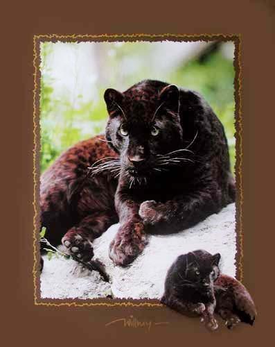 Schwarzer Panther by Willney II