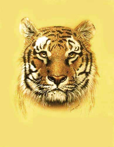 Tiger, gold by J. A. Smith