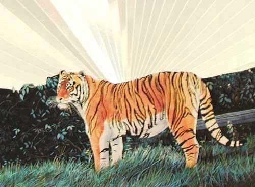 Sibirischer Tiger Alu Bild