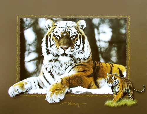 Tiger by Willney