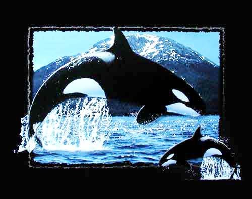 Orcas by Willney