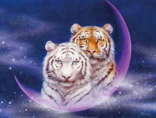 Tiger Fantasie, Harai Bild
