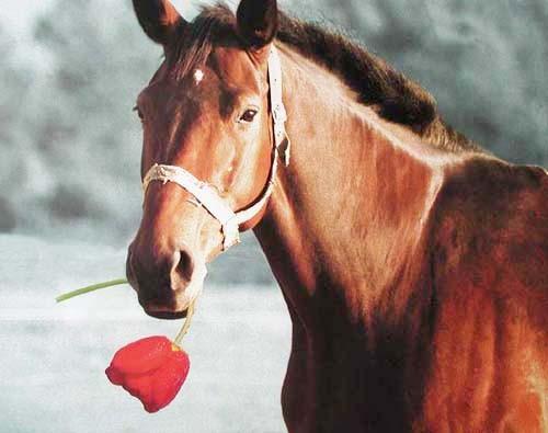 Pferd mit Tulpe