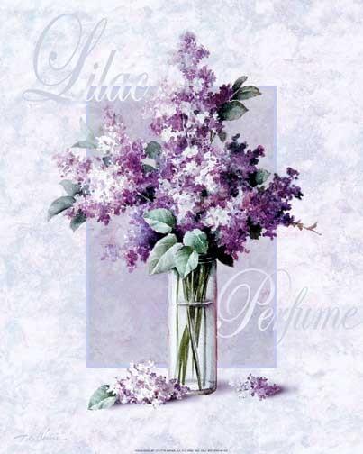 Blumen, Flieder