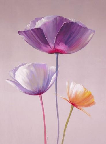 Drei Mohnblümen mit violettem Hintergrund
