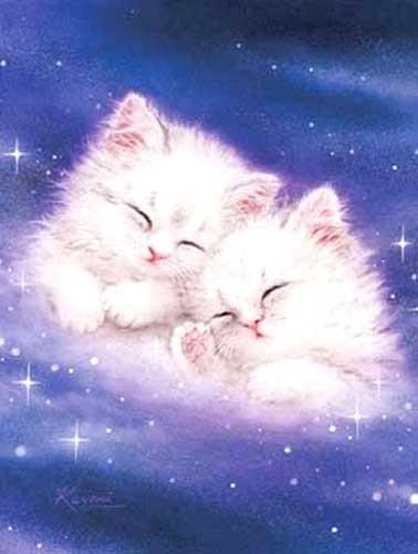 Kleine Katzen, Galaxy Dream by Kayomi Harai