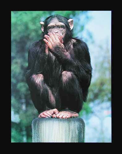 Affe: Nichts Sagen
