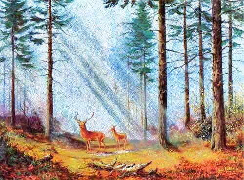 Hirsche im Wald mit Sonnenstrahlen by Vokes