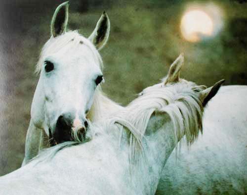 Pferde by Zofia Raczkowska