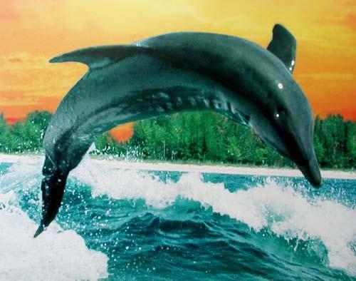 Springender Delfin vor Küste Poster