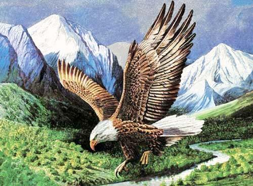 Weißkopfseeadler im Landeanflug Alu Bild
