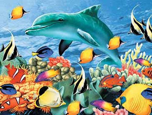 Delphin und Tropische Fische Alu Bild 16x21