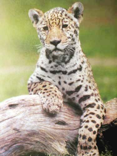 Kleiner Leopard Alu Bild 16x21