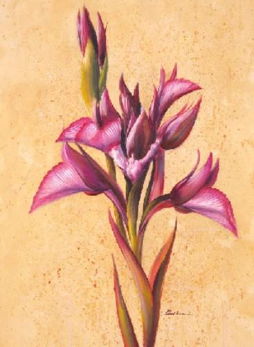 Blume in Pink, Flor Grande II