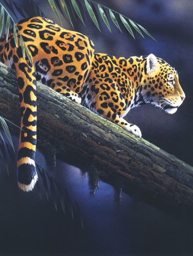 """Leopard """" Watching in the Shadows"""""""