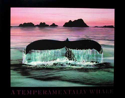 A Temperamentally Whale