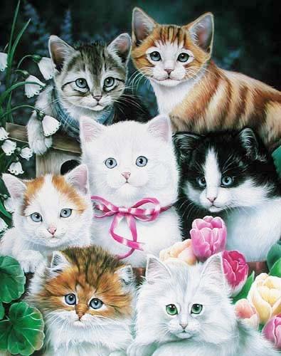 Katzenmontage by Newland
