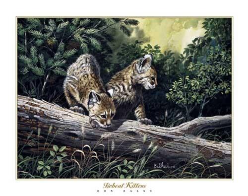 Bobcat Kittens by Don Balke