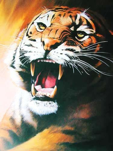 Fauchender Tiger Poster