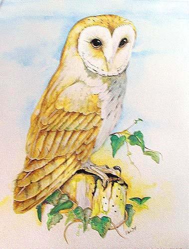 Barn Owl by Paul Sly