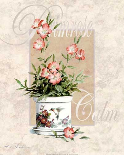 Blumen, Primrose Calm