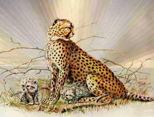 Geparde Alubild