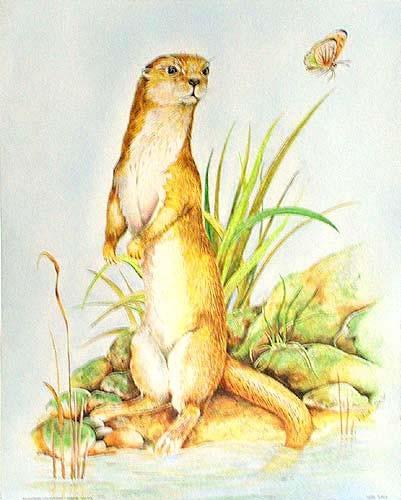 Otter und Schmetterling Alu Bild 21x26