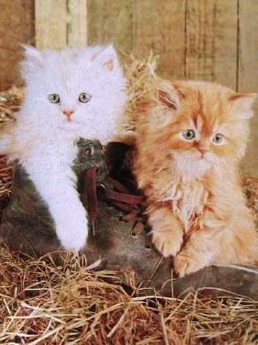 Katzen und Stiefel