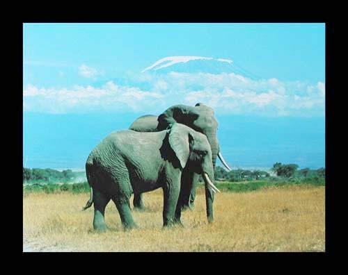 Zwei Elefanten Poster 40x50 cm