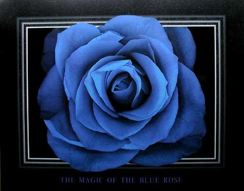 The Magic of the Blue Rose by Lens & Lens *