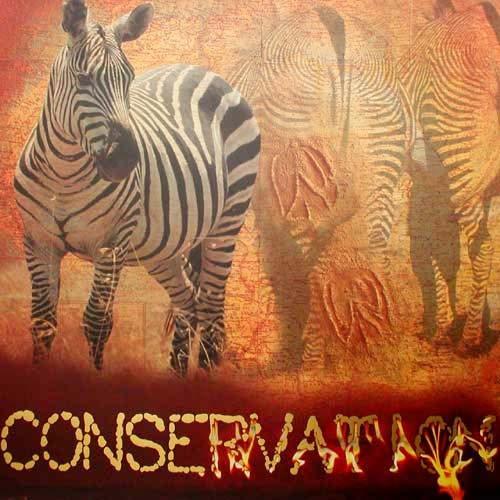 """Zebras """"Conservation"""""""