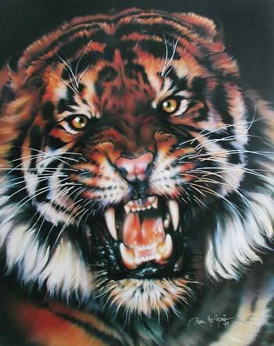 Tiger by Dan Mc Maris
