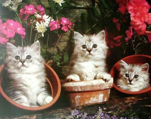 Kleine Kätzchen in Blumentöpfen, Poster