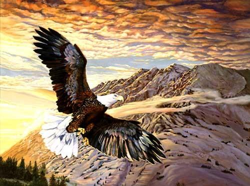 Weißkopfseeadler im Flug Alu Bild